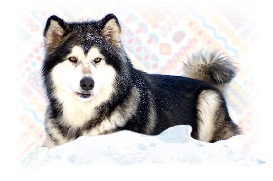 Terra-banner-dog-L-v1